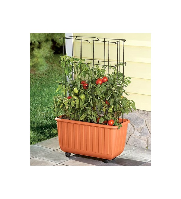 Rolling Self Watering Tomato Planter
