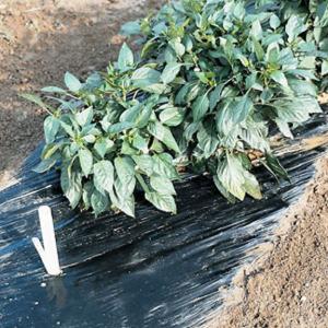 Black Plastic Garden Mulch