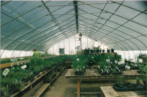Inside Commercial Double Polyfilm Greenhouse