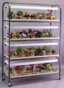 4 Tier Plant Stands Indoor Brown