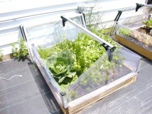 Season Extender Double Cold Frame