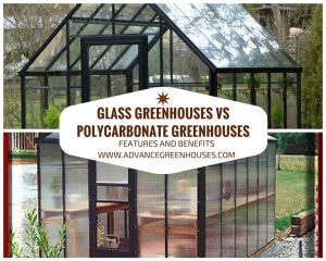Glass Greenhouses vs Polycarbonate Greenhouses
