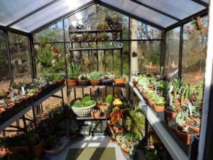 8 x 8 Acadian greenhouse inside